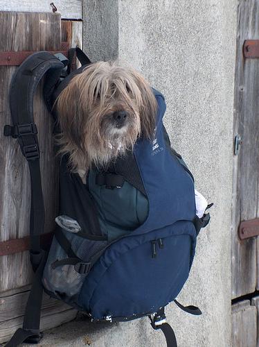 rucksack-hunde